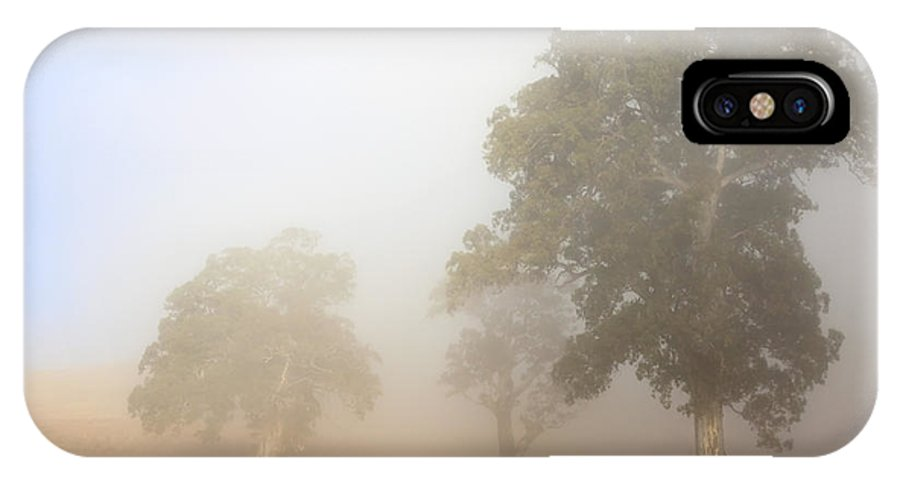 Gum Tree IPhone X Case featuring the photograph Emerging From The Fog by Mike Dawson