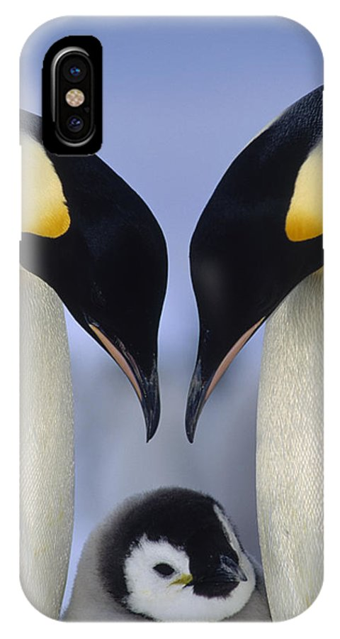 00140140 IPhone X Case featuring the photograph Emperor Penguin Family by Tui De Roy