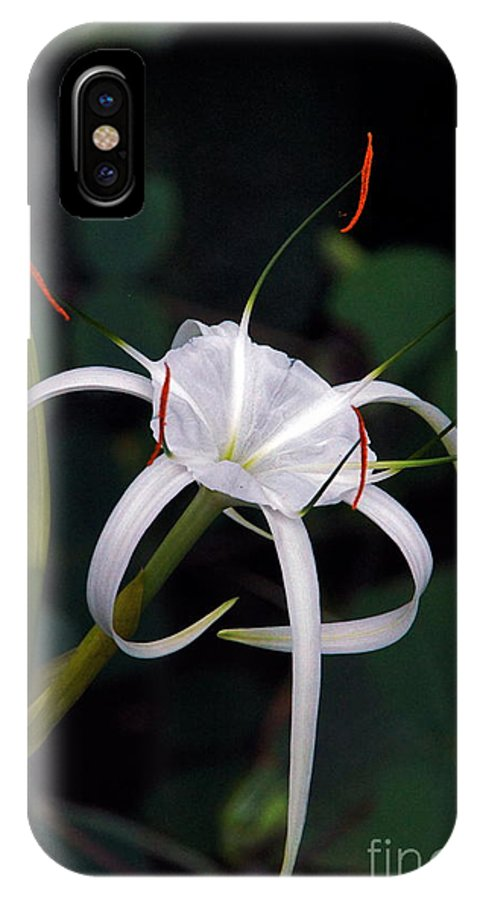 Spider Lily IPhone X Case featuring the photograph En Pointe by Byron Varvarigos