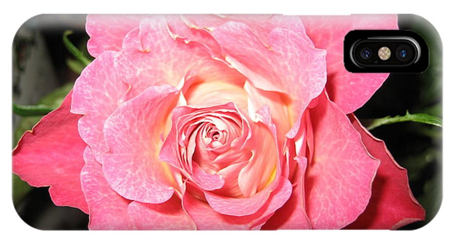 Rose IPhone Case featuring the photograph English Rose by Paolo Marini