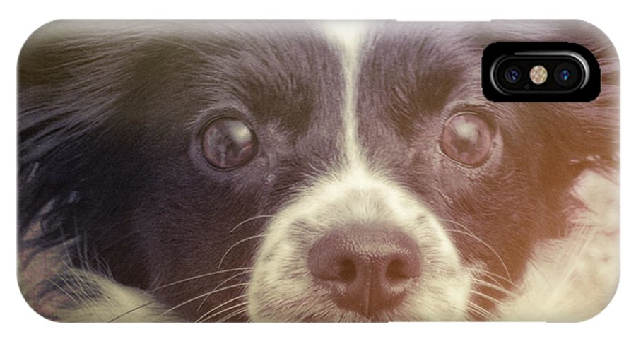 Dog IPhone X Case featuring the photograph Ennis by JAMART Photography