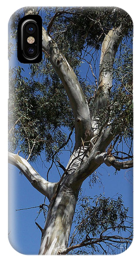 Trees IPhone X Case featuring the photograph Eucalyptus by Kathy McClure
