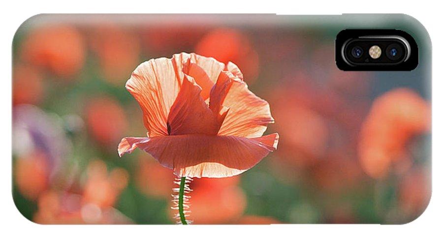 Lisa Knechtel IPhone X Case featuring the photograph Evening Sun Illumination by Lisa Knechtel
