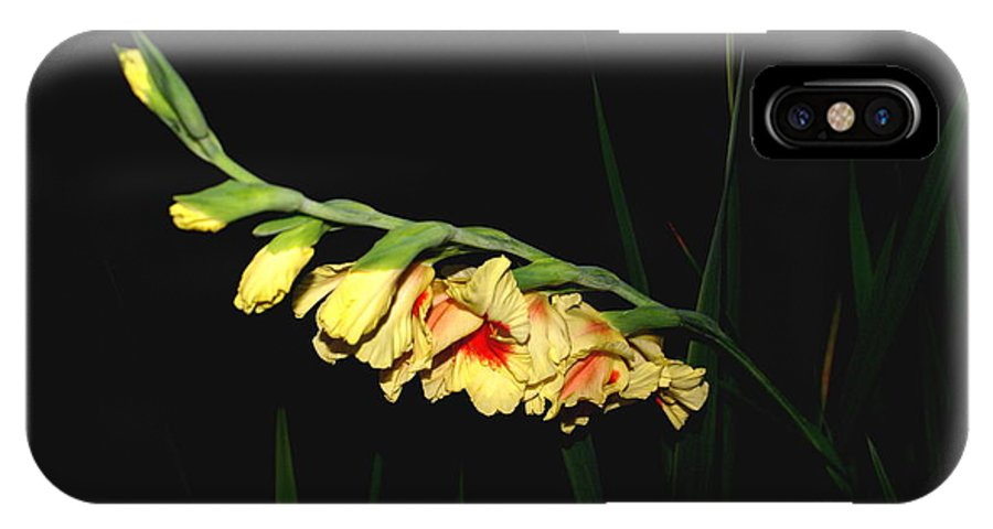 Floral IPhone X Case featuring the photograph Evening Warmth by Debbie May