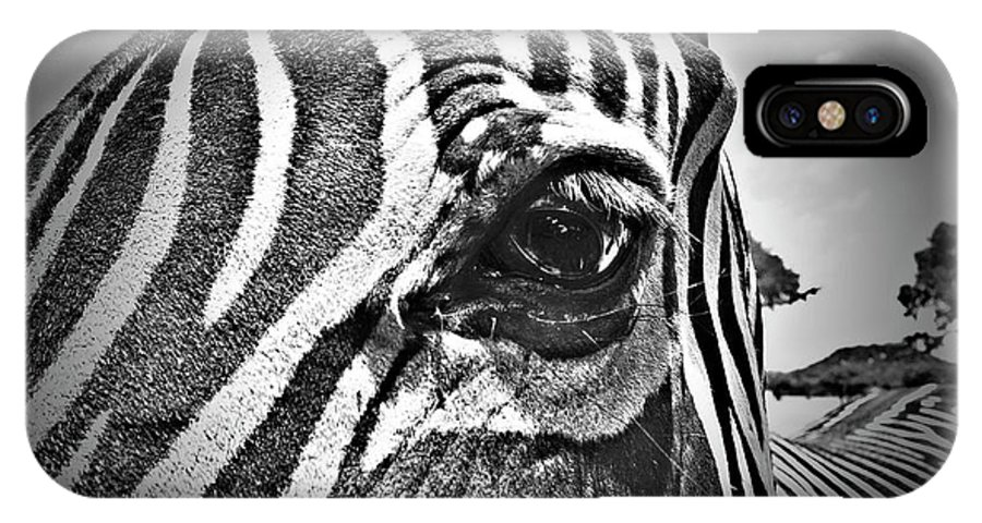 Zebra IPhone X Case featuring the photograph Eye Level by Douglas Barnard