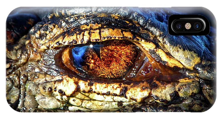 Alligator IPhone X Case featuring the photograph Eye Of The Apex by Mark Andrew Thomas