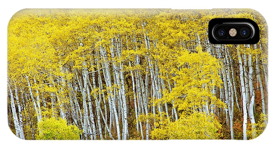 Aspen IPhone X Case featuring the photograph Fall Aspen Meadow by Dori Peers