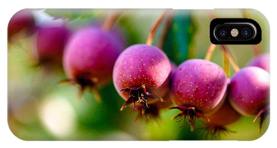 Berry IPhone Case featuring the photograph Fall Berries by Marilyn Hunt