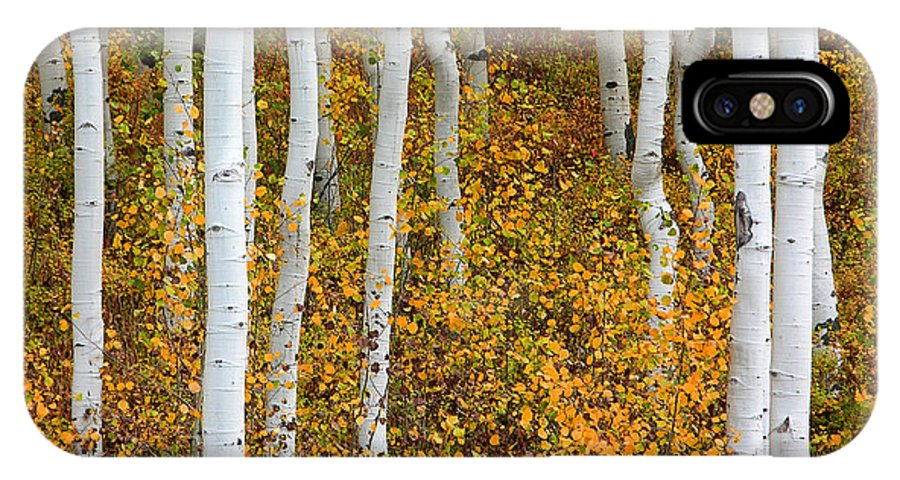Aspen IPhone X Case featuring the photograph Fall Color by Dori Peers