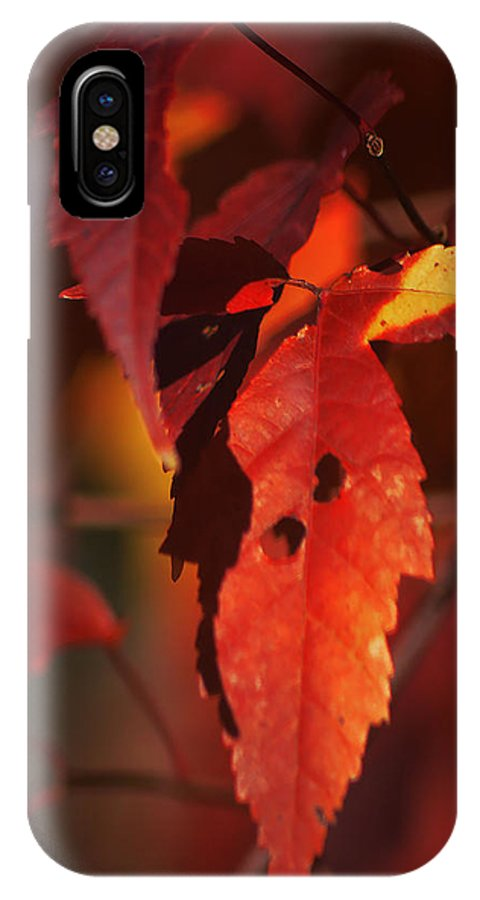 Fall IPhone X Case featuring the photograph Fall Colors by Michelle Hoffmann