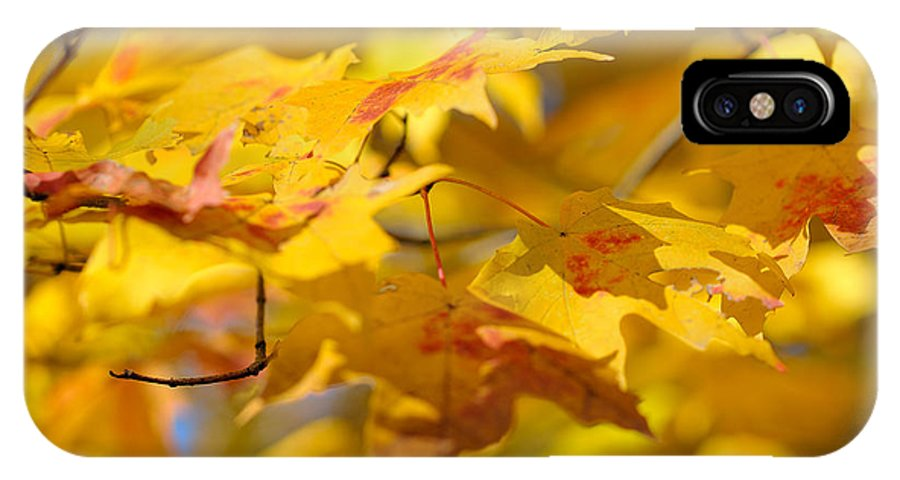 Nature IPhone X Case featuring the photograph Fall Colors by Sebastian Musial