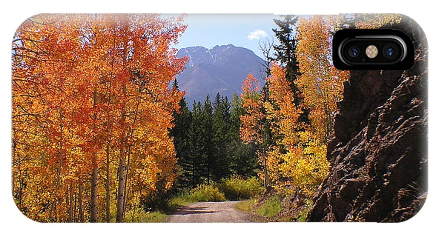 Trees IPhone Case featuring the photograph Fall In Colorado by Carol Milisen