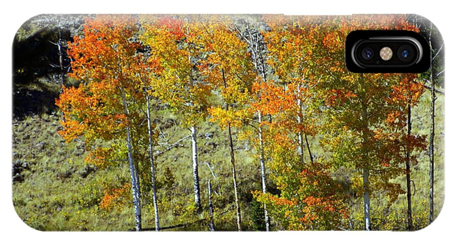 IPhone X Case featuring the photograph Fall In Colorado by Marty Koch