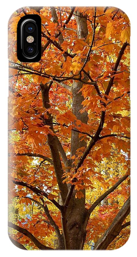 Kaloya Park IPhone X Case featuring the photograph Fall In Kayloya Park 2 by Will Borden