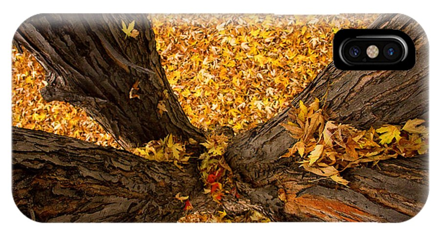 Maple IPhone X Case featuring the photograph Fall by James BO Insogna