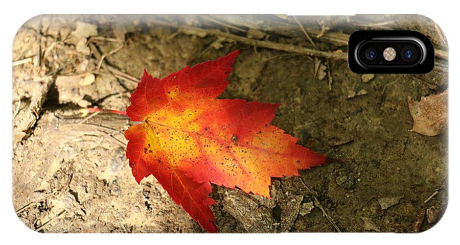 Autumn IPhone X Case featuring the photograph Fall Leaf by Christina McNee-Geiger
