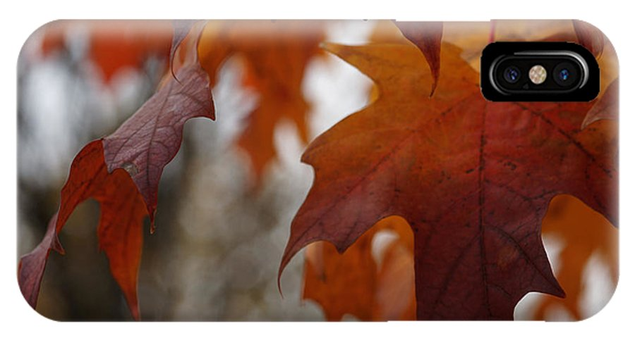 Autumn IPhone X Case featuring the photograph Fall by Linda Shafer