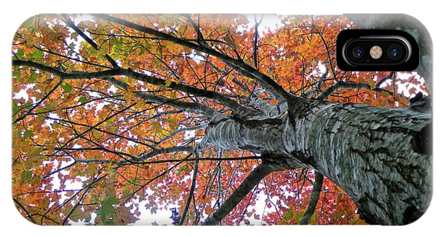Tree IPhone X Case featuring the photograph Fall by Shannon Turek