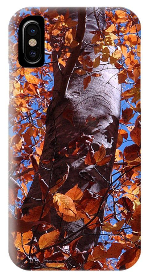 Landscape IPhone X Case featuring the photograph Fall Tree by Mary Halpin