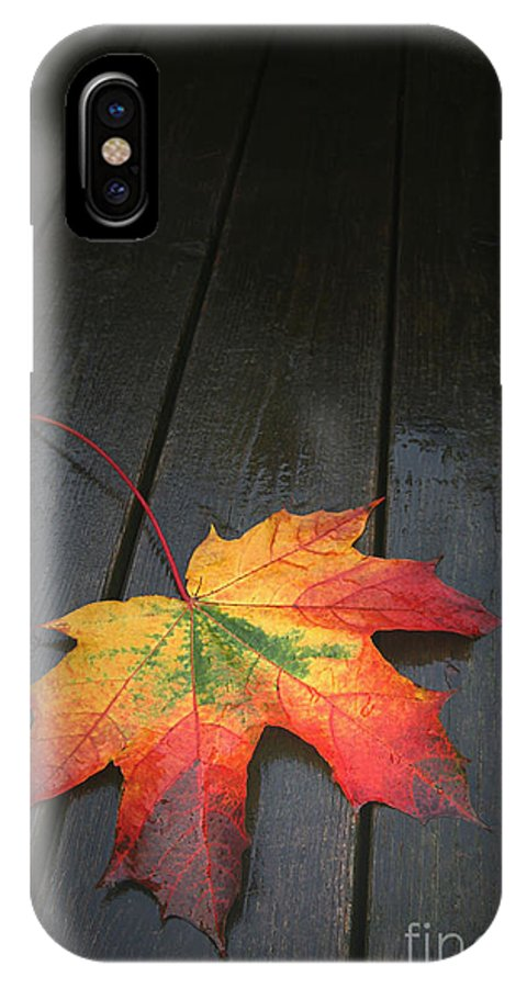 Leaf Autumn Fall Rain Color IPhone X Case featuring the photograph Fall by Winston Rockwell