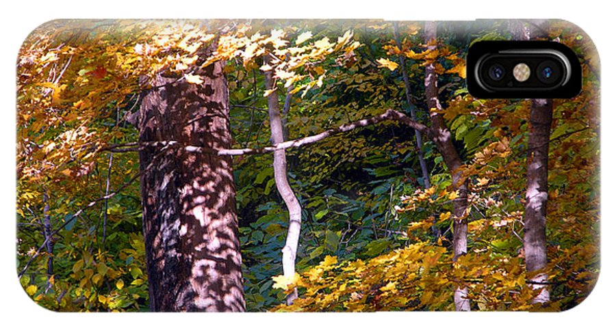 Fall Trees IPhone X Case featuring the photograph Falls Splendor by John Lautermilch