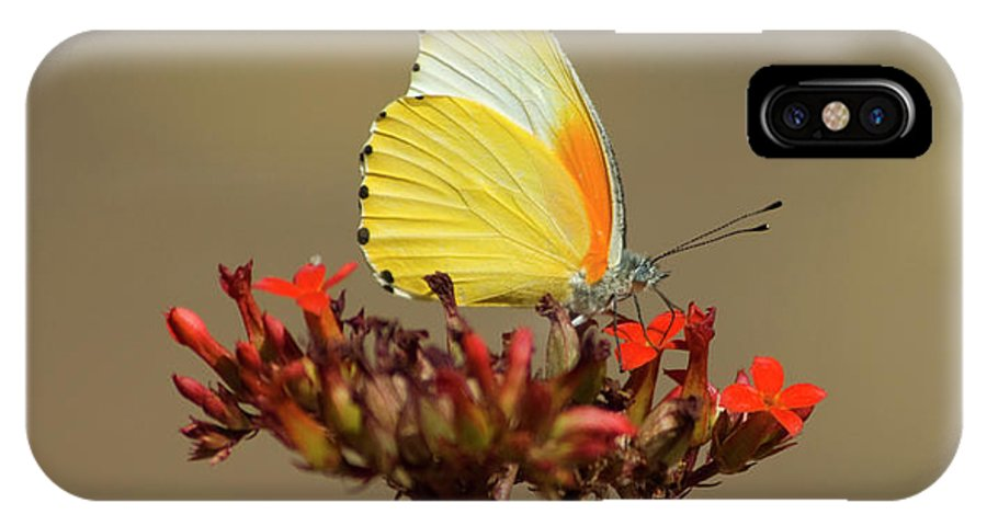 Butterfly IPhone X Case featuring the photograph False Dotted Border Butterfly by Genevieve Vallee