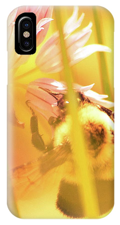 Bees IPhone X Case featuring the photograph Fame Is A Bee by Bob Orsillo