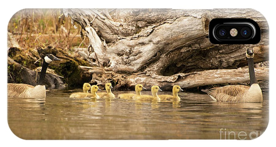 Canadian Geese IPhone X / XS Case featuring the photograph Family Affair by Jan Mulherin