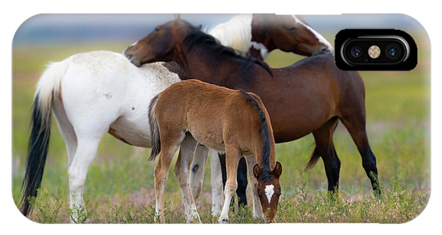 Mustangs IPhone X Case featuring the photograph Family Moment by Greig Huggins
