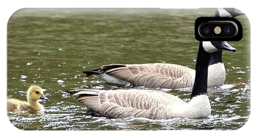 Ducks With Baby Duck IPhone X Case featuring the photograph Family Unit by John Taylor