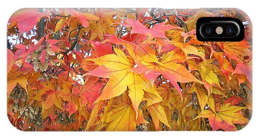 Fall Pictures Autumn Pictures Fall Leaves Painting Yellow Paintings Fall Colors Painting Greeting Card Painting Seasonal Painting Seasons Painting Botanical Painting Tree Painting IPhone X Case featuring the photograph Fantasy Of Fall by Karin Dawn Kelshall- Best