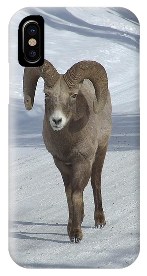 Bighorn Sheep IPhone X Case featuring the photograph Farewell To The King by Tiffany Vest