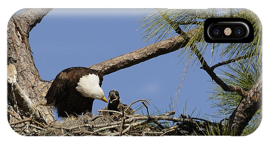 Eagle IPhone X Case featuring the photograph Feeding Time by Keith Lovejoy