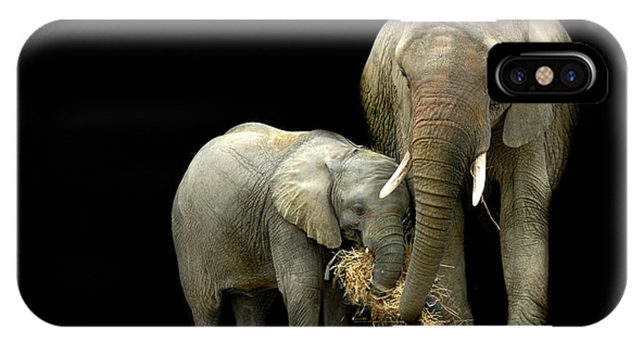 Elephant IPhone Case featuring the photograph Feeding Time by Stephie Butler