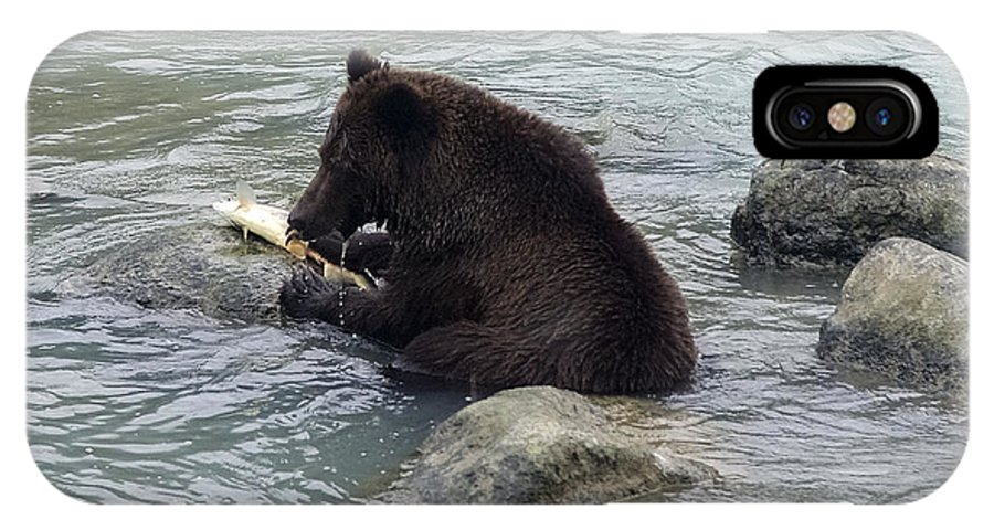 Grizzly Bear IPhone X Case featuring the photograph Feasting Bear by Richard J Cassato