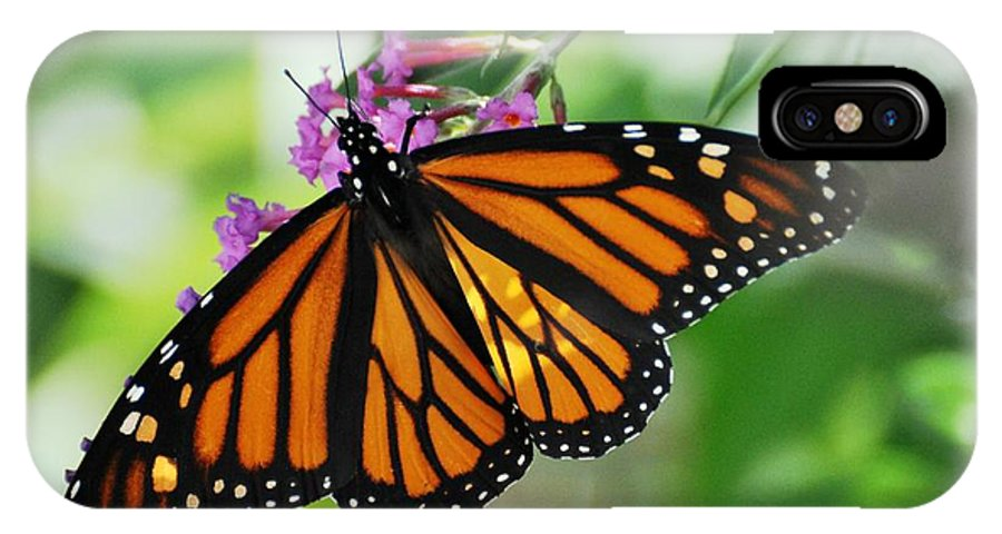 Butterfly IPhone X Case featuring the photograph Female Butterfly by Jo-Ann Matthews