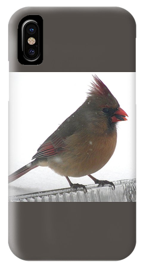 Bird IPhone X / XS Case featuring the photograph Female Cardinal by Nancy Crouse