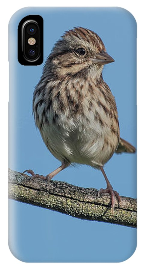 Bird IPhone X Case featuring the photograph Female House Finch Resting by Bruce Pritchett
