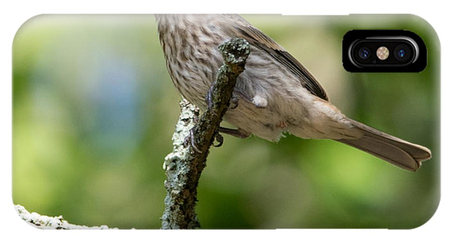 Bird IPhone X Case featuring the photograph Female House Sparrow by Alicia Collins