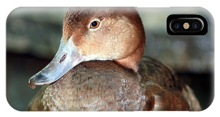 Duck IPhone X Case featuring the photograph Female Redhead Duck by Randy Matthews