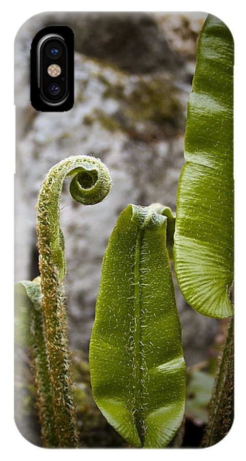 Irish IPhone X Case featuring the photograph Fern Study At Blarney Castle Ireland by Teresa Mucha