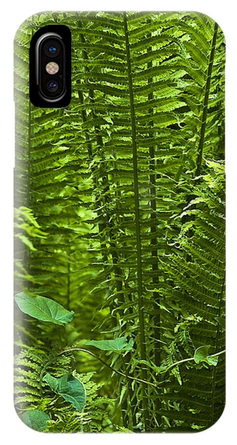 Countryside IPhone X Case featuring the photograph Fern by Svetlana Sewell