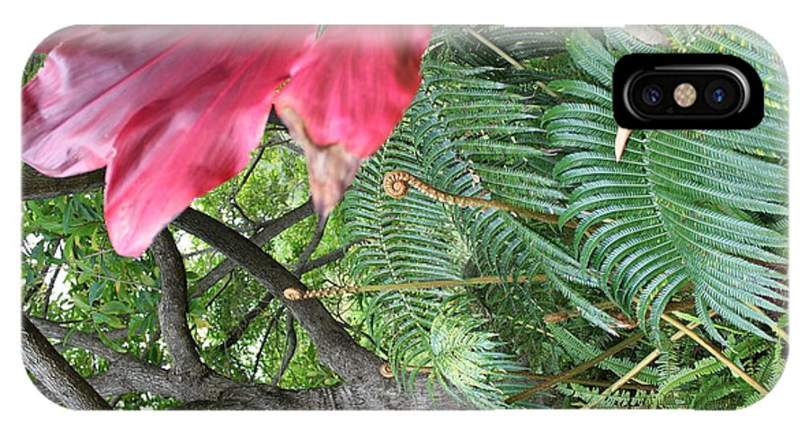Ferns Maui Hawaii Flowers Kula Botanical Garden IPhone X Case featuring the photograph Ferns Come Alive by Christopher Lefor