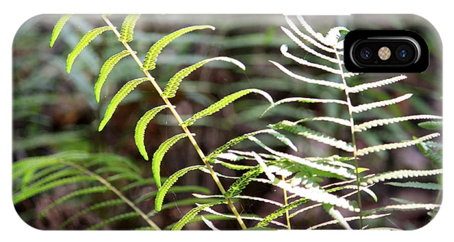 Ferns IPhone X / XS Case featuring the photograph Ferns In Natural Light by Carol Groenen