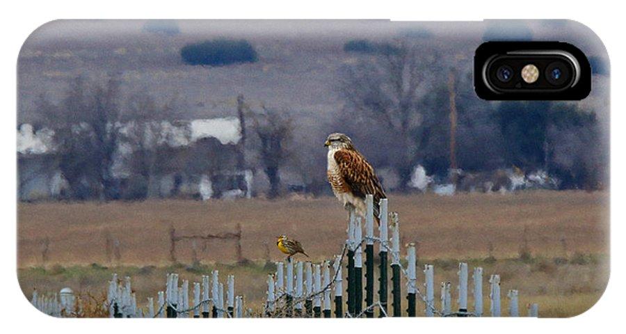 Ferruginous IPhone X / XS Case featuring the photograph Ferruginous Hawk And Meadowlark by Craig Corwin