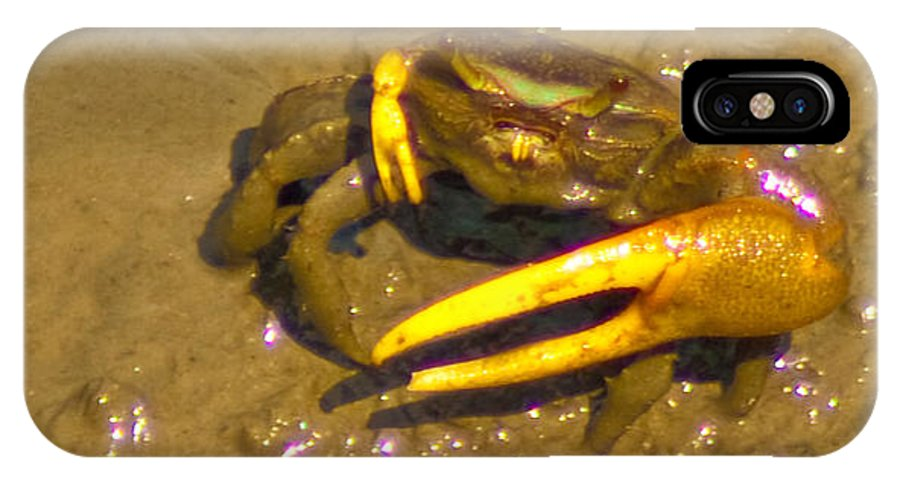 Crab IPhone X Case featuring the photograph Fiddler Crab Pano by Bill Barber