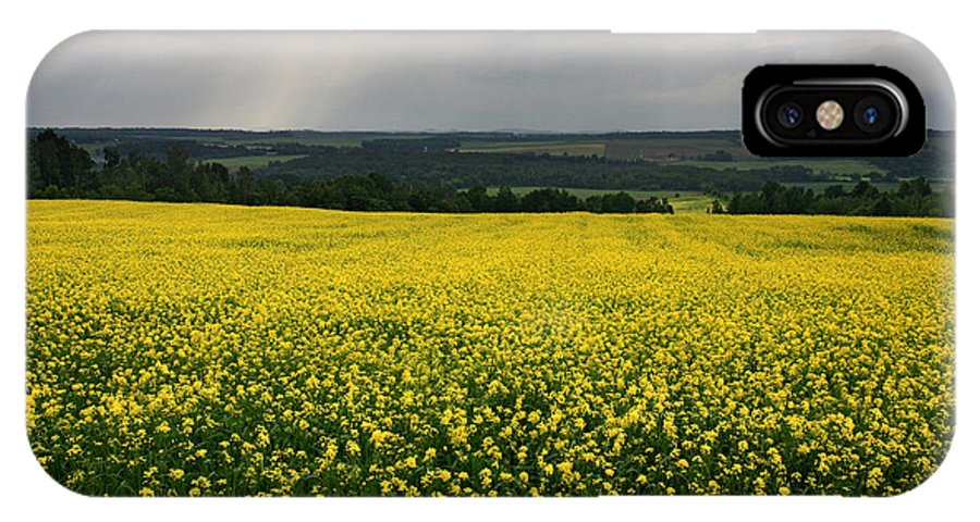 Quebec IPhone X Case featuring the photograph Field Of Gold Sherbrooke Quebec Canada by Pierre Leclerc Photography