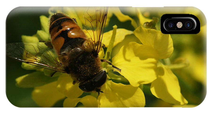 Bee IPhone X Case featuring the photograph Finding Each Other by Linda Shafer