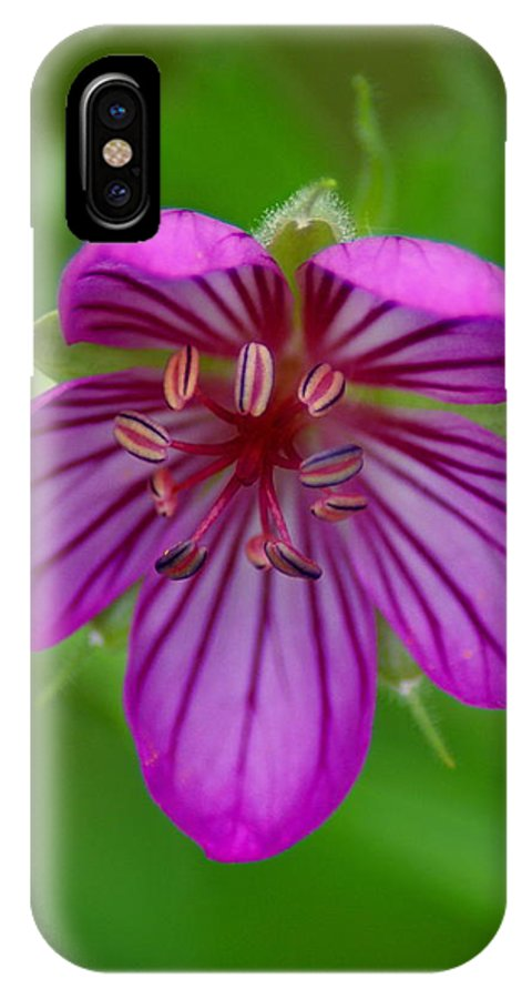 Flowers IPhone X Case featuring the photograph Finding Truth In Nature by Ben Upham III
