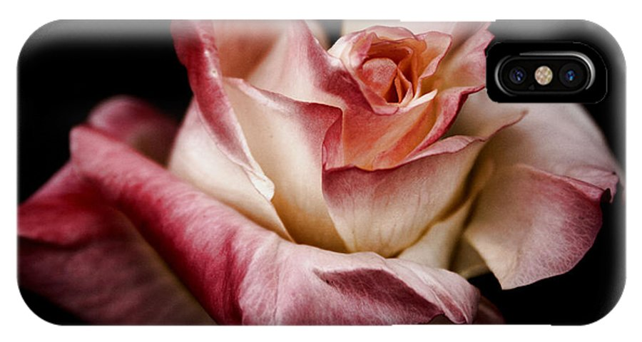 Rose IPhone X Case featuring the photograph Fire And Ice Rose 2 by Sally Bauer